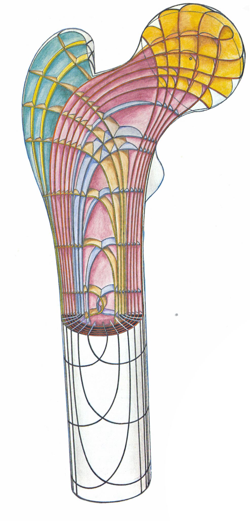 Femur-Trajektorien-3D.jpg